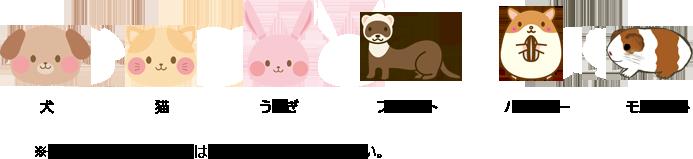 犬、猫、うさぎ、フェレット、ハムスター、モルモット。※その他動物につきましては、お電話にてご相談ください。