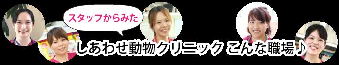 shiawase_14